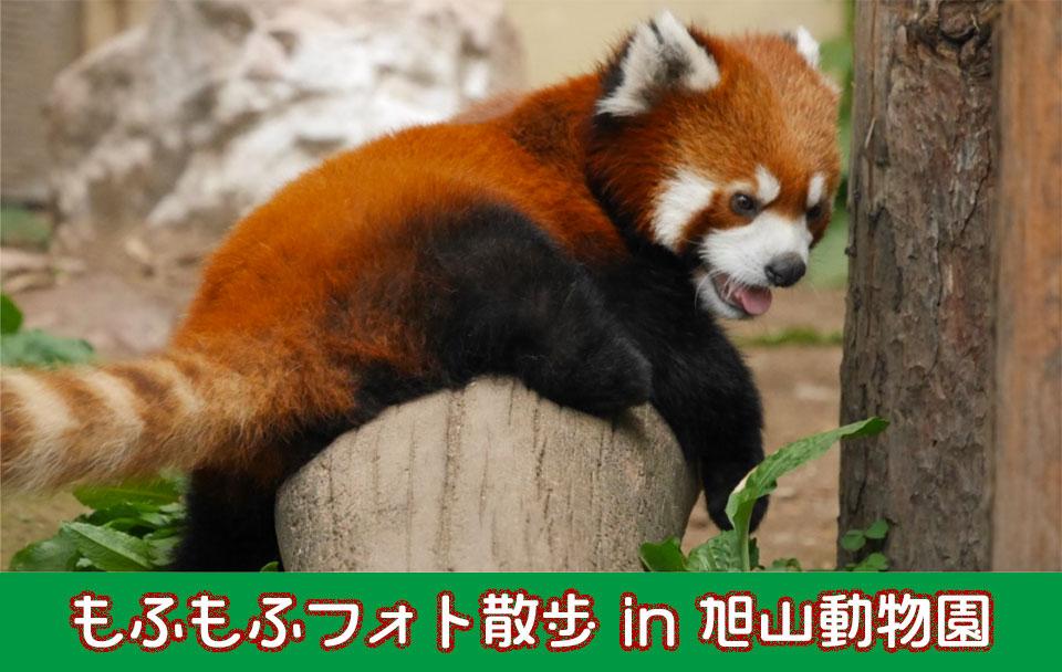 楽しく動物たちの写真を撮ってみたい方のイベントのご案内です!